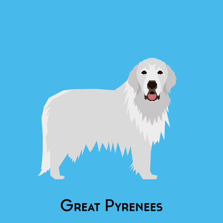 great pyrenees: Isolated great pyrenees on a blue background