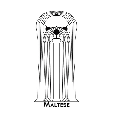 maltese: Isolated silhouette of a cute Maltese on a white background