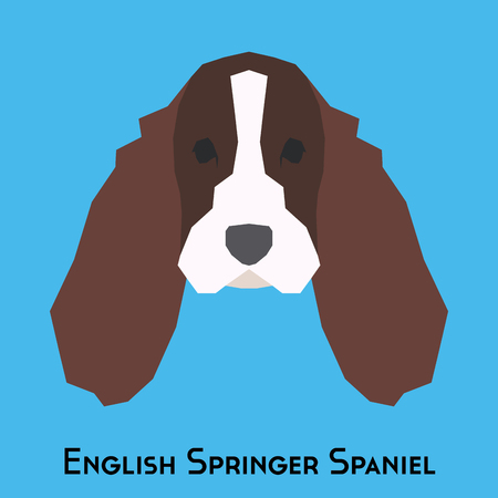 springer spaniel: Isolated English Springer Spaniel on a blue background Illustration