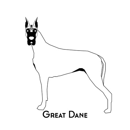 dane: Isolated silhouette of a great dane on a white background