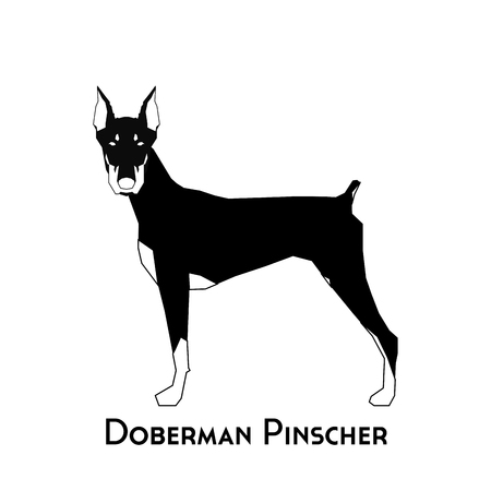 pinscher: Isolated silhouette of a doberman pinscher on a white background
