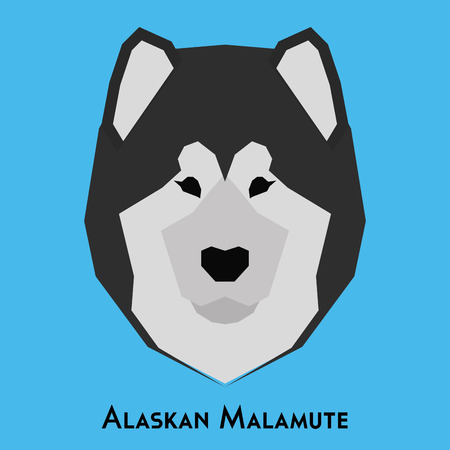 alaskan malamute: Isolated alaskan malamute on a blue background Illustration