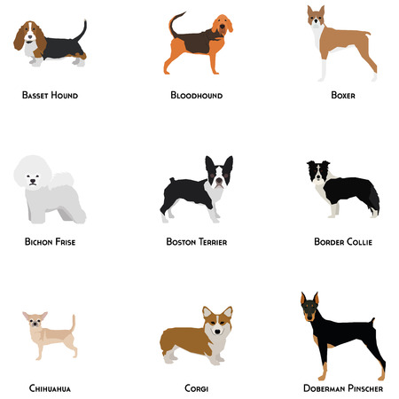bloodhound: Set of different dog breeds on a white background Illustration