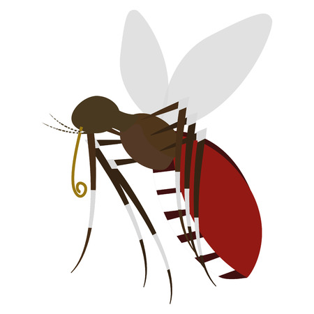 Isolated mosquito on a white background, Vector illustration