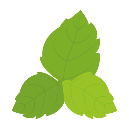Isolated group of green leaves on a white background, vector illustration