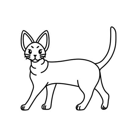 Isolated outline of a cat - Vector illustration