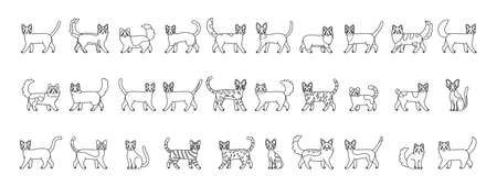 Set of cats outlines. Cats breeds - Vector illustration