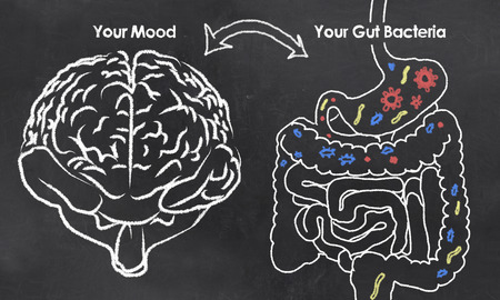 bowel: Mood and Gut Bacteria with chalk on Blackboard