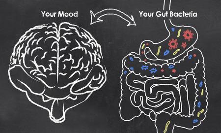 Nastrój i Gut Bakterie kredą na tablicy