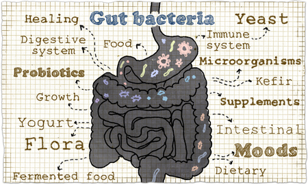 Illustration about Gut Bacteria