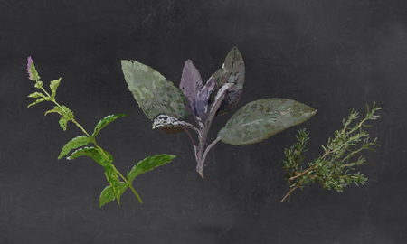 Fresh Herbs, Mint, Sage, Thyme Illustrated with Chalk on Blackboard Standard-Bild - 107575640