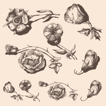 Set of vintage flowers Illustration