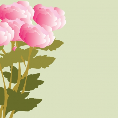 Peonies backgrounds Illustration