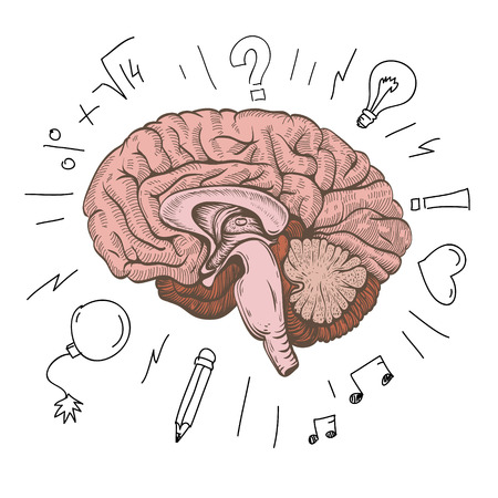 muse: Brain hand drawn isolated on a white  Vector illustration