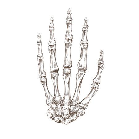 Skeleton hand, vector illustration Illustration