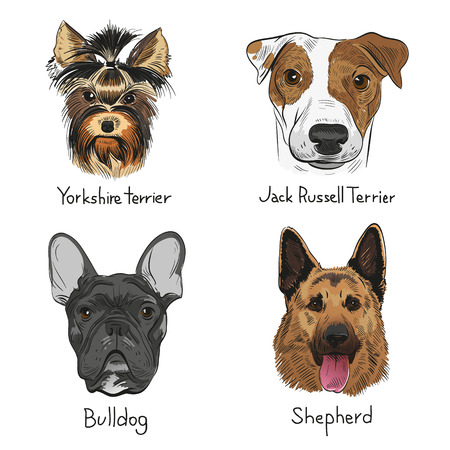 Set of hand drawn dogs, vector illustration