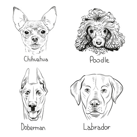 labrador: Set of hand drawn dogs, vector illustration