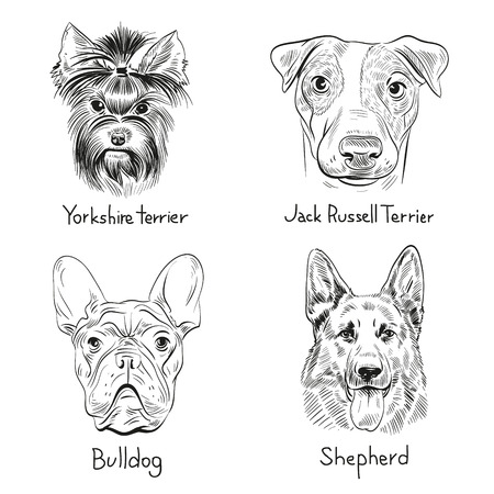 Yorkshire Terrier: Set of hand drawn dogs, vector illustration