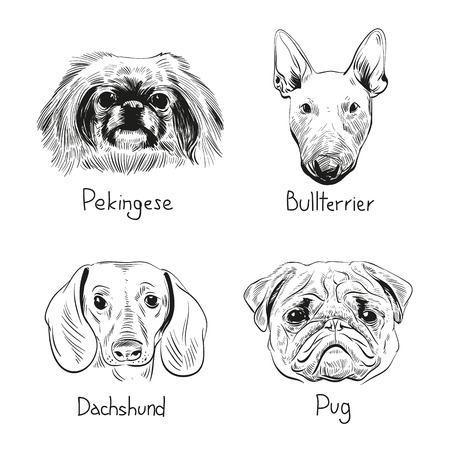pug dog: Set of hand drawn dogs, vector illustration