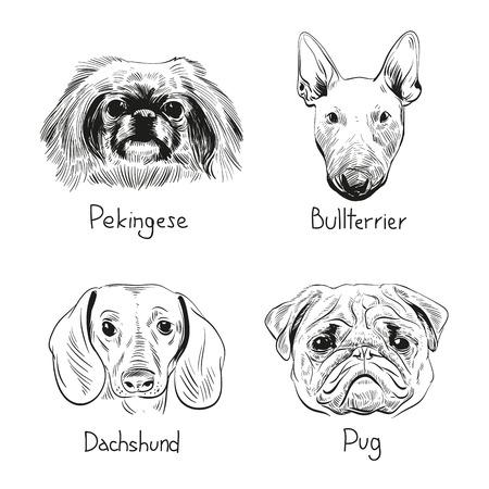 pekingese: Set of hand drawn dogs, vector illustration