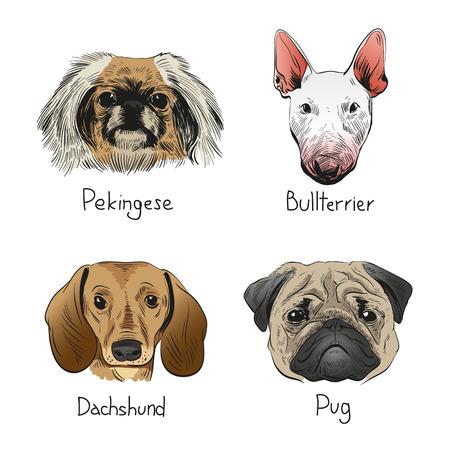 Ensemble de chiens dessinés à la main, illustration vectorielle