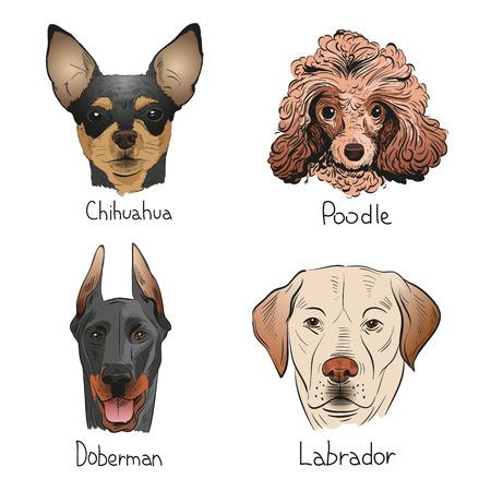 Set Hand gezeichnete Hunden, Vektor-Illustration Standard-Bild - 35329708