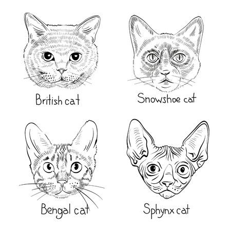 Set van de hand getekende katten