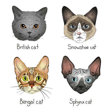meow: Set of hand drawn cats