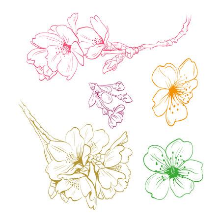Bloemen hand getekende, vector illustratie