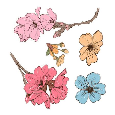flor de durazno: Flores dibujado a mano, ilustración vectorial