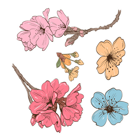 Flowers hand drawn, vector illustration Çizim