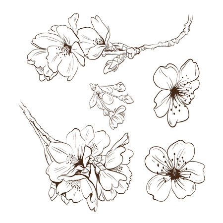 Flowers hand drawn, vector illustration Illustration