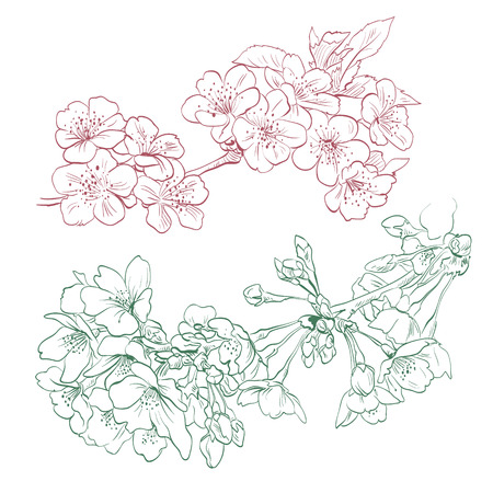 flor de durazno: Flores dibujado a mano, ilustraci�n vectorial