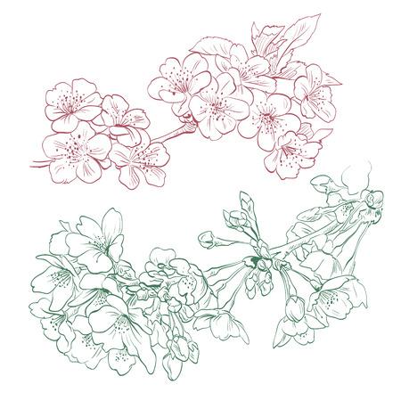 peach blossom: Flowers hand drawn, vector illustration Illustration