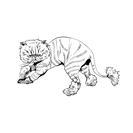persian cat: persian cat, illustration Illustration