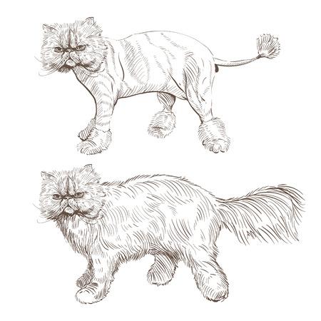 gatto persiano. stile Barber, illustrazione Vettoriali