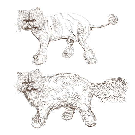 persian cat. Barber style, illustration Vector Illustration