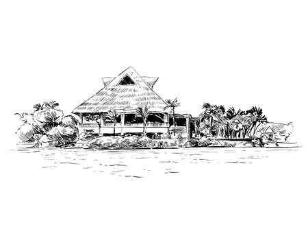 palm tree: Mexico. Xel-Ha park. Hand drawn vector illustration.