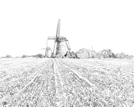Scenic field of tulips in the background windmills in Holland. Netherlands, Europe. Hand drawn vector illustration