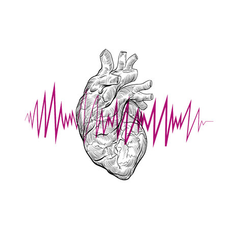 polygraph: Human heart hand drawn isolated on a white backgrounds .Anatomical sketch. Vector illustration.