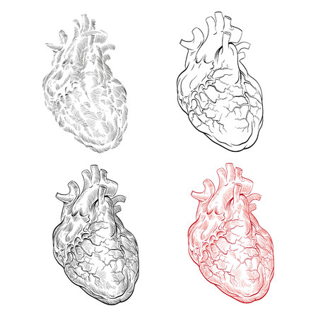 Human heart hand drawn isolated on a white backgrounds. Anatomical sketch. Vector illustration. Illustration