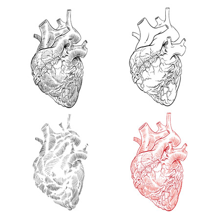 Mano humana del corazón dibujada aislada en fondos blancos. Bosquejo anatómico Ilustración vectorial