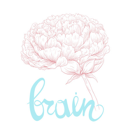 Stylized brain in the shape of a flower peony. Creative brain. Fashion illustration. Vector design.