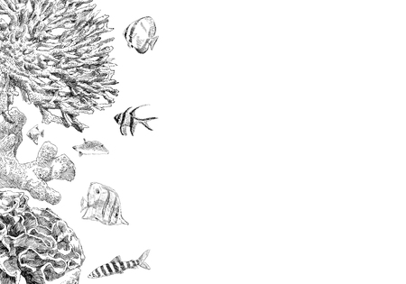 Seabed inhabitants fish and corals. Sea and ocean sketch backgrounds, hand drawn vector illustration.