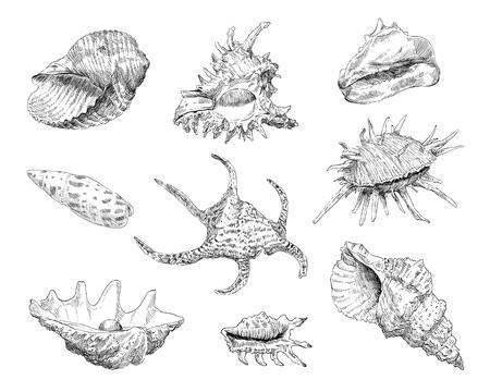 Seashells hand drawn set. Vector illustration.