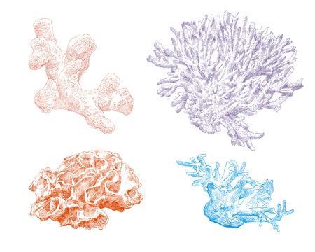 Corals hand drawn set. Vector illustration.