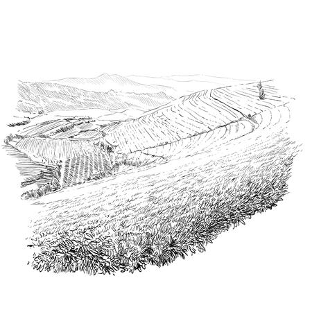 Tea plantations. Ceylon. Sri Lanka. Hand drawn vector illustration.