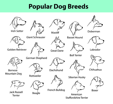 Popular Dog Breeds Profile Faces. Dog Silhouette Portraits set. German Shepherd, Beagle, Labrador, Retriver, Bulldog, Boxer, Schnauzer, Doberman, Mastiff, Basset Hound, Terrier etc