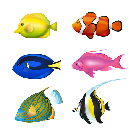 tang: Tropical Fishes Set. Zebrasoma, Clownfish, Blue Tang, Lyretail Anthias, Angelfish, Moorish Idol Vector Illustration Set.