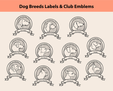 basset hound: Set of Dog Breeds Labels, Dog Clubs Emblems. Profile Silhouette Dog Faces Badges. Irish Setter, Labrador, Golden Retriever, Jack Russel Terrier, Bernese, French Bulldog, Basset Hound, Chihuahua, Husky, Beagle, Dachshund